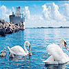 Swan family slide puzzle