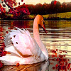 Swan in the autumn puzzle