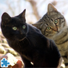 Funny And Sweet Kittens Jigsaw