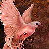 Sweet pink dove puzzle