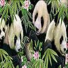 Sweetie pandas slide puzzle