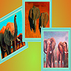 The elephants family  in the desert puzzle