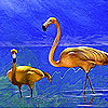 The long legged flamingos puzzle