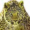 The nature leopards puzzle