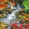 The rapid stream