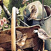 Thirsty birds puzzle