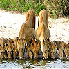 Thirsty cats slide puzzle
