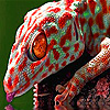 Thirsty red gecko puzzle
