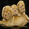 Three bulldog slide puzzle