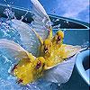 Three canary slide puzzle