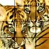 Tiger Brothers Puzzle