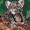 Tired baby tiger slide puzzle