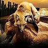 Tired sleepy fox slide puzzle