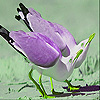 Tired thirsty birds slide puzzle