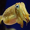 Transparent ocean fish slide puzzle