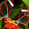 Transparent wings slide puzzle