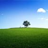 Tree landscape jigsaw