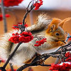 Trembling squirrel slide puzzle