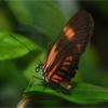 Tropical Butterfly Jigsaw