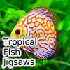 Tropical Fish Jigsaw Tournament