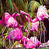 Tropical flamingos slide puzzle