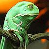 Tropical frog slide puzzle