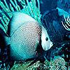Turquoise ocean fish puzzle