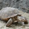 Turtle Jigsaw