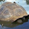 Turtle Sliding Puzzle