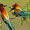 Two amazing bird slide puzzle