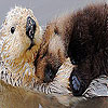 Two beaver slide puzzle