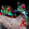 Two brave frogs puzzle