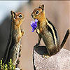 Two squirrel slide puzzle