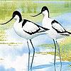Two tiro bird slide puzzle