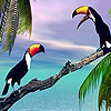 Two toucan in the sea slide puzzle