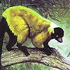 Ugly lemur puzzle