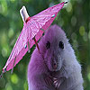 Umbrella and mouse slide puzzle