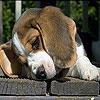 Upset dog slide puzzle