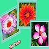 Various garden flowers puzzle