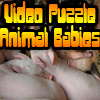 Video Puzzle: Animal Babies