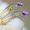 Violet eyes slide puzzle