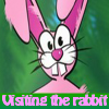 Visiting the rabbit