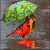 Walking in the rain slide puzzle