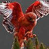 Warrior hawk puzzle