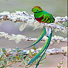 Weak green bird slide puzzle
