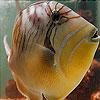 Weird Aquarium fish slide puzzle