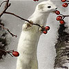 White animal and rosehip slide puzzle