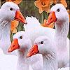 White confused ducks slide puzzle