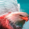 White eagle puzzle