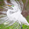 White fancy bird slide puzzle